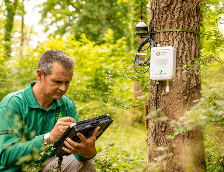 Monitoring of tree growth and the impacts of environmental change on the UK's forests